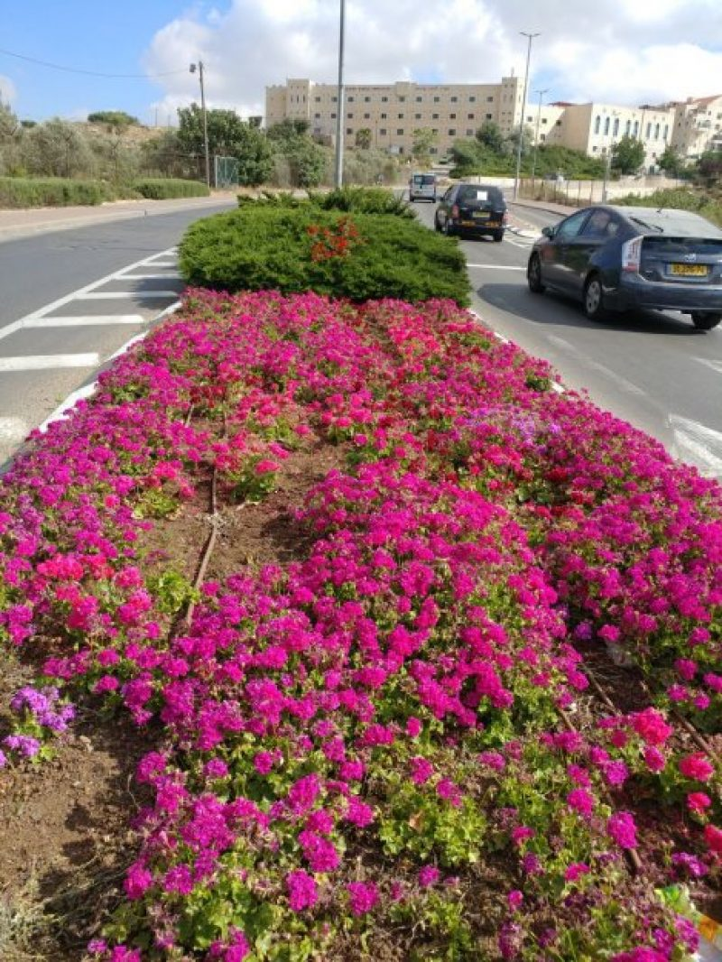 פרחים 1